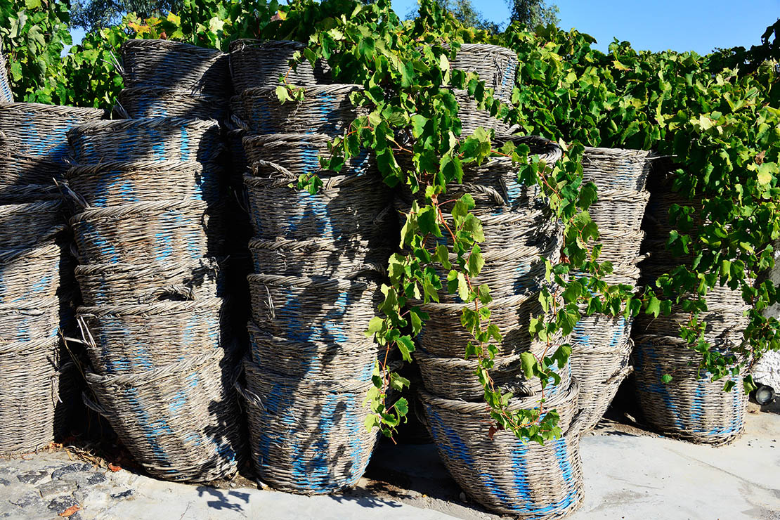 Baskets for grapes in Santorini, photo from wine tour